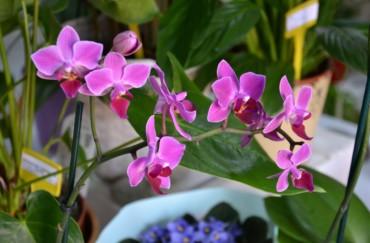 Sobno cvijeće i bilje